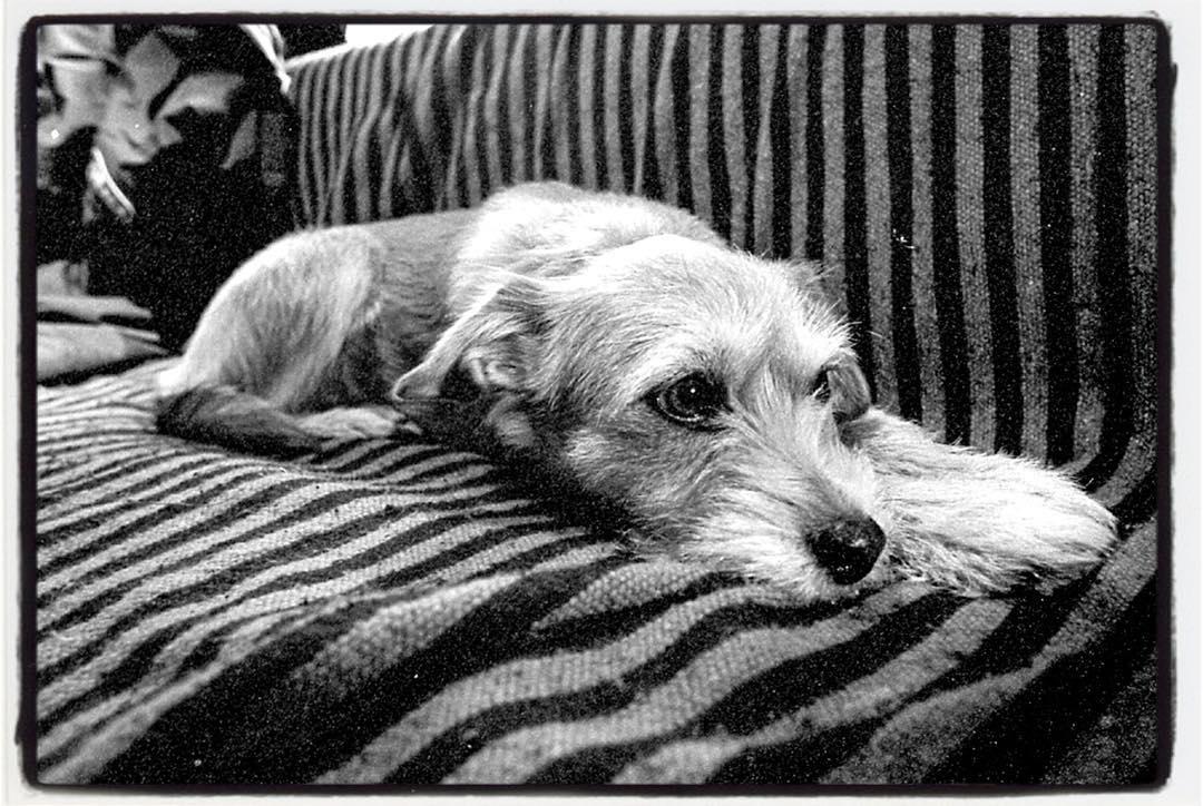 Beule's dog Govi, best dog ever! RIP. www.freebeule.de #freebeule #govi #dog #analog #eos1n #filmphotography #35mm #bailgun #gerdriegerphotography