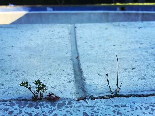 Coping - Davids pool. #concrete #pool #bowl #coping #bailgun #magazine